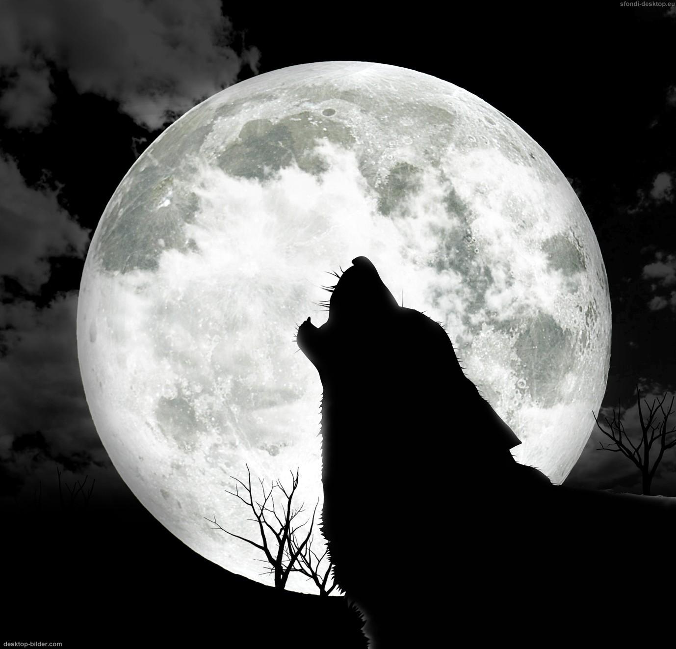 Hauling At The Moon