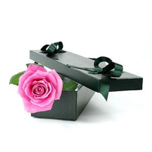 single-pink-rose-350