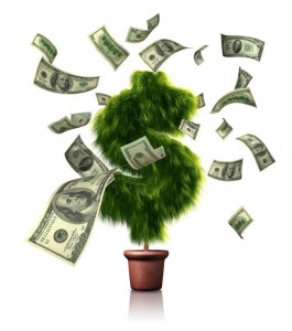 money-tree