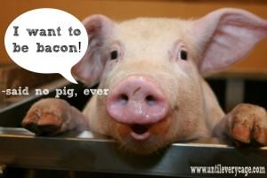 -pigs-36848664-3318-2212