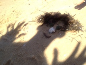 shelss-face-beach-treasures-face-beach-debris-face-kids-making-shadow-people-on-beach-beach-games-for-toddlers1