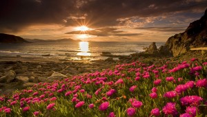 sunrise-nature-wallpaper-images-and-high-definition-flowers-sunrise-wallpapers-free-download-wallpaper-android-for-mobile-pc-walls-iphone-with-quotes