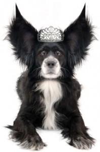 crown-dog