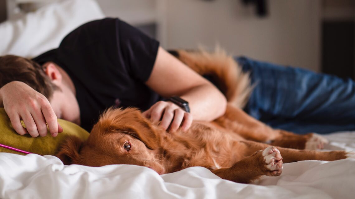 How Getting a Pet Can Help Boost Your Mental  Health